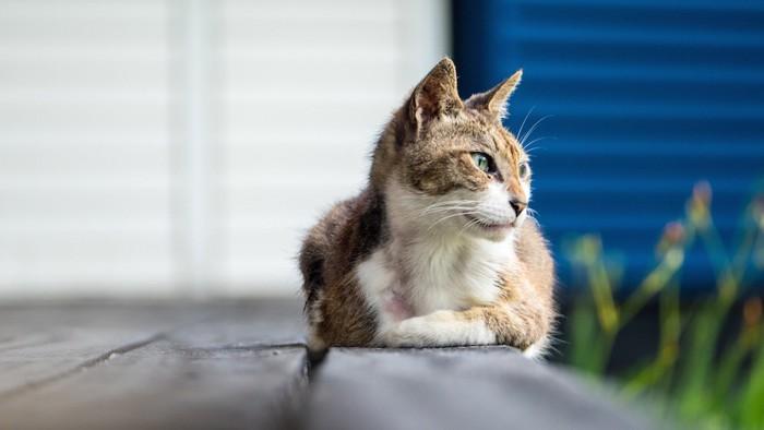 座っている高齢の猫