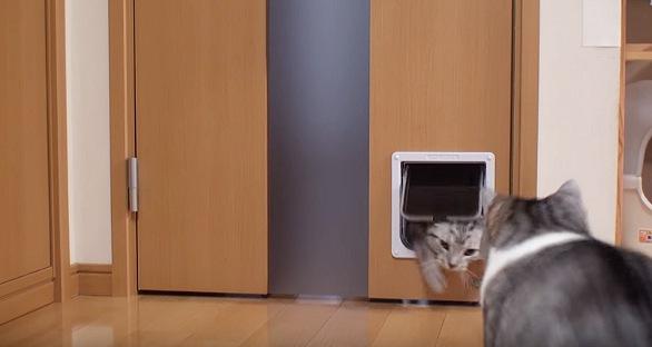ネコ用ドアをくぐってくる猫