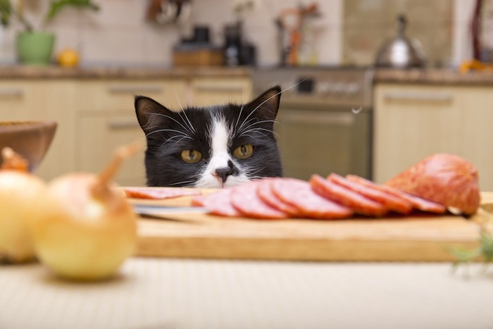 テーブルの上のハムを見る猫