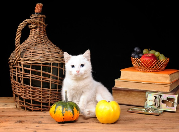猫とフルーツイメージ