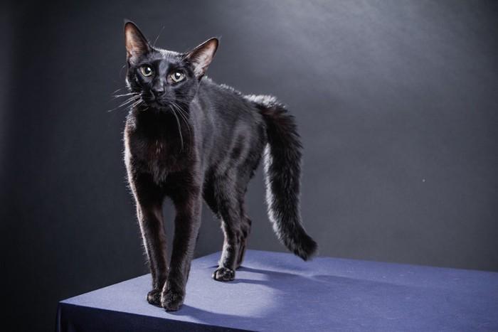 台の上に立つ黒猫