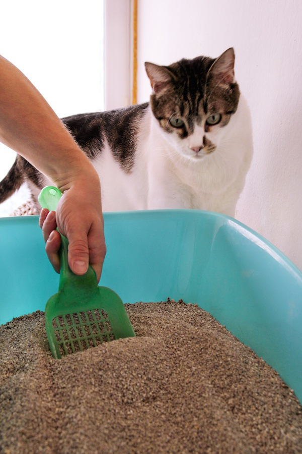 トイレ掃除する人を見る猫