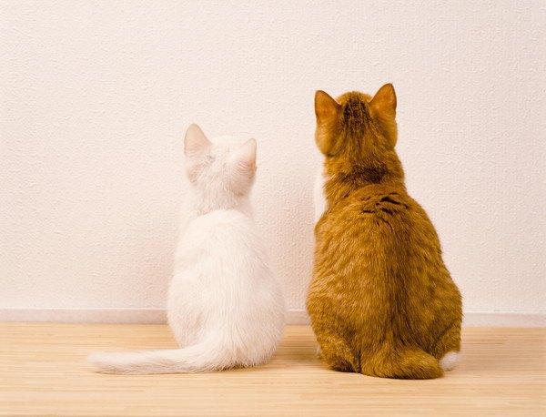 白猫と茶色猫が壁を見る