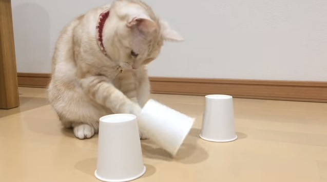 中央のコップを開ける猫