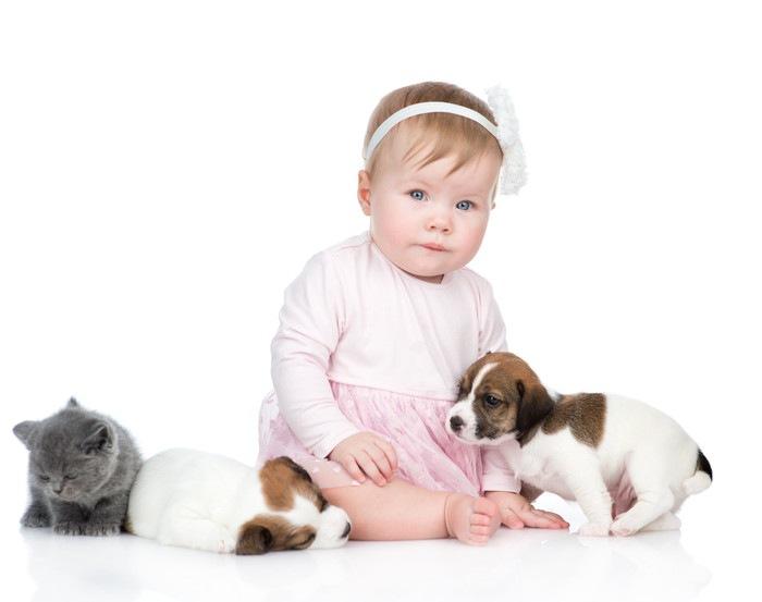 猫と犬と遊ぶ赤ちゃん