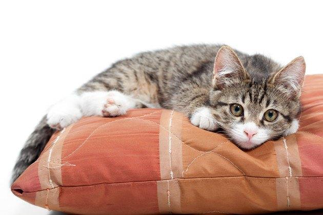 クッションの上の子猫
