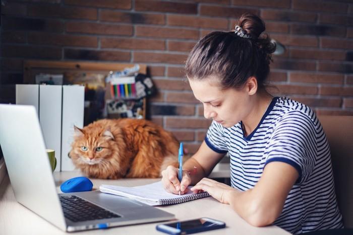 仕事をする女性のそばでくつろぐ猫