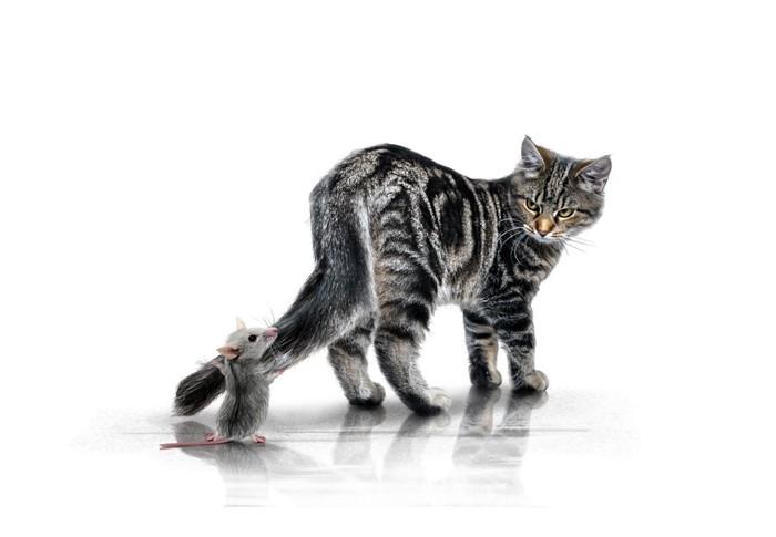 ねずみと猫