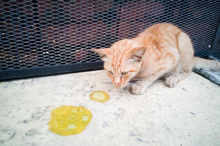 うちの猫が緑色の嘔吐物を・・・うちのにゃんこが …