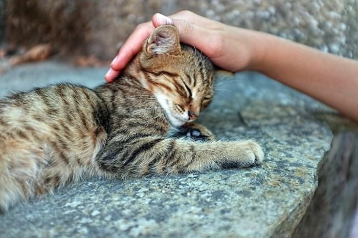 人に頭を撫でられている野良の子猫