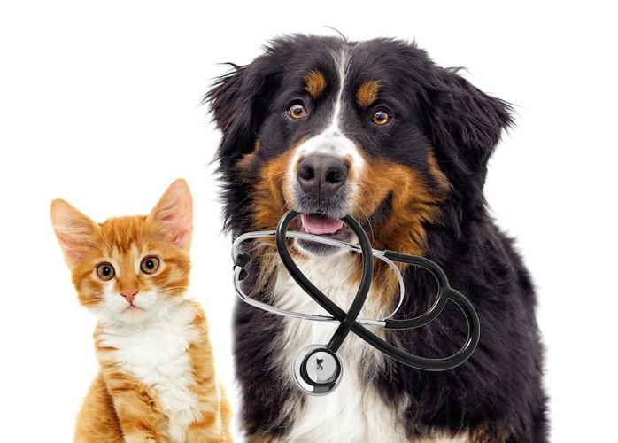 子猫と聴診器を咥えた犬