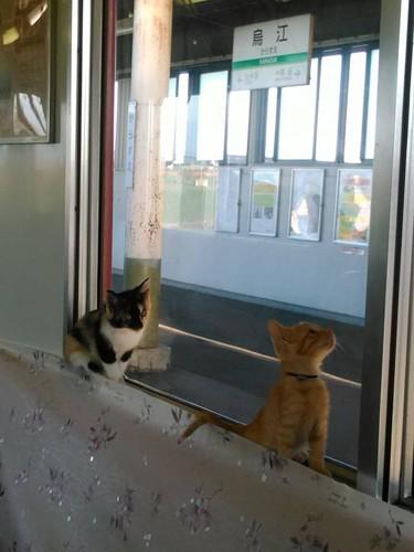 窓の外を見る子猫たち