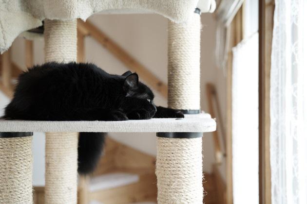 キャットタワーと黒猫