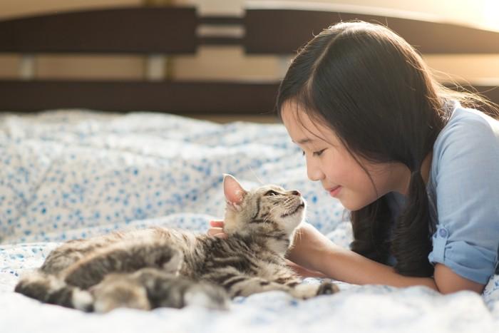 見つめ合う猫と女の子