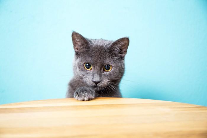 テーブルに手をかけるシャルトリュー