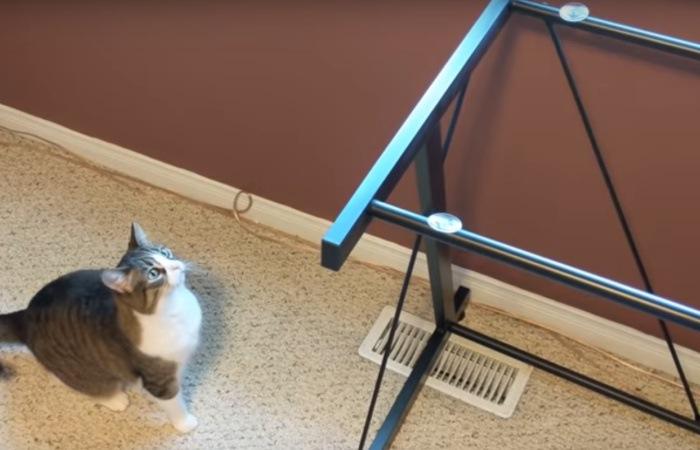 机に飛び乗ろうとする猫