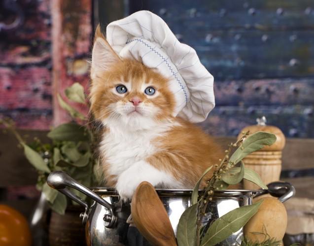 コックさんの猫