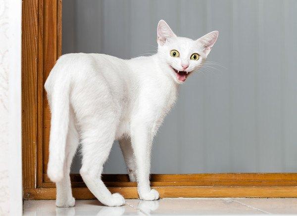 白猫が驚く