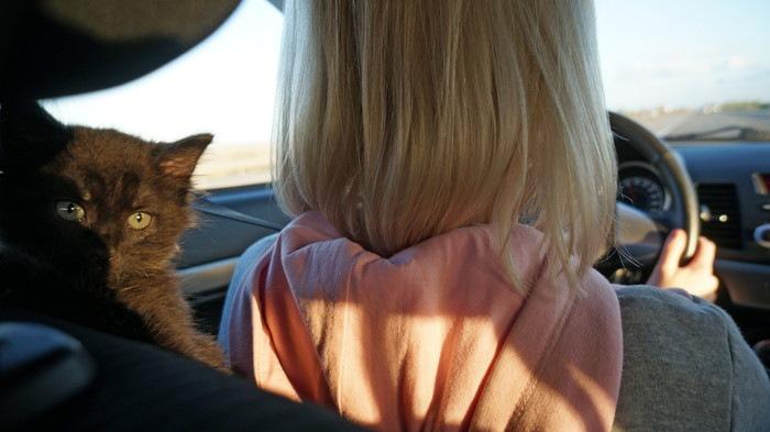 車を運転する女性と猫