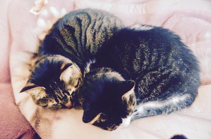 丸まって並ぶ2匹の猫