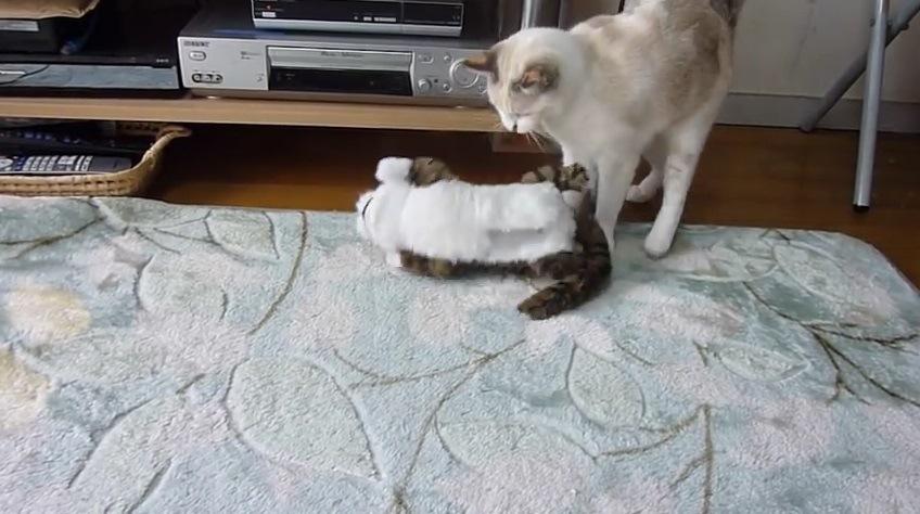 猫の足元で動き出すオモチャ