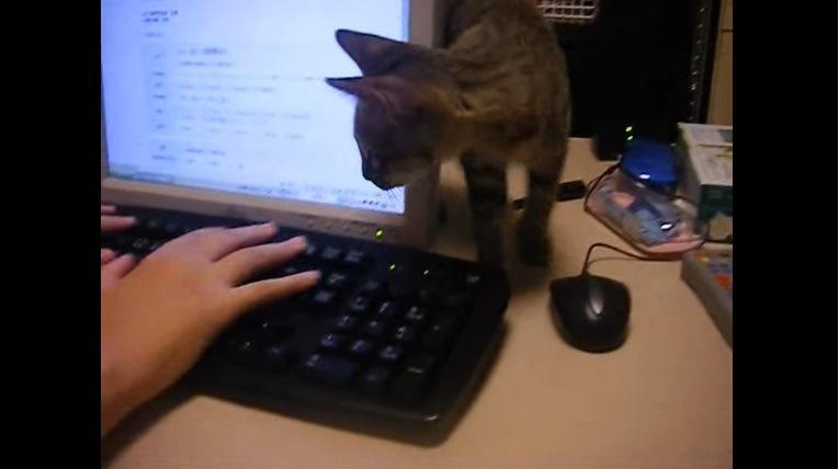 机の上を歩く猫