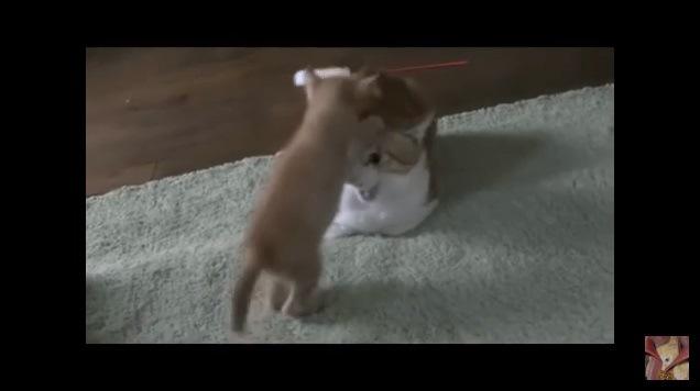 立ち上がり、成猫の頭を引っ張る子猫