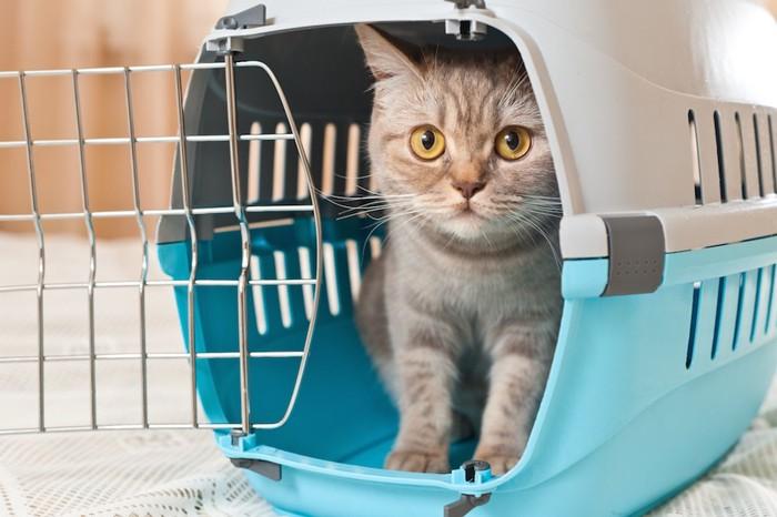 水色のキャリーに入った猫