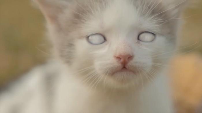 ゾンビ化する子猫