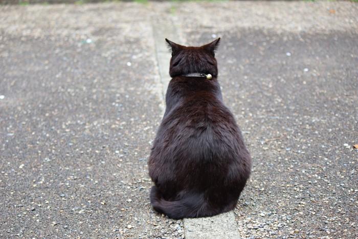 後ろを向いている黒猫