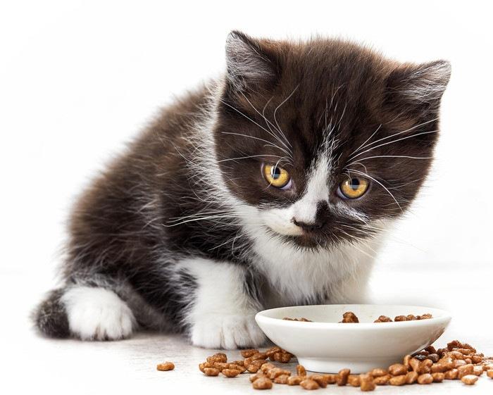 黒白の子猫が食事中
