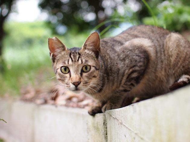 ひっかきそうな野良猫