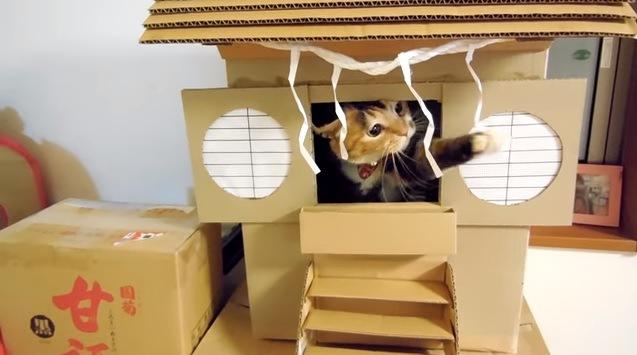しめ縄にじゃれる猫