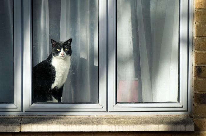 窓の外を見ている猫
