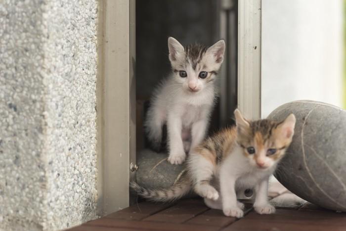 2匹の猫の新生児