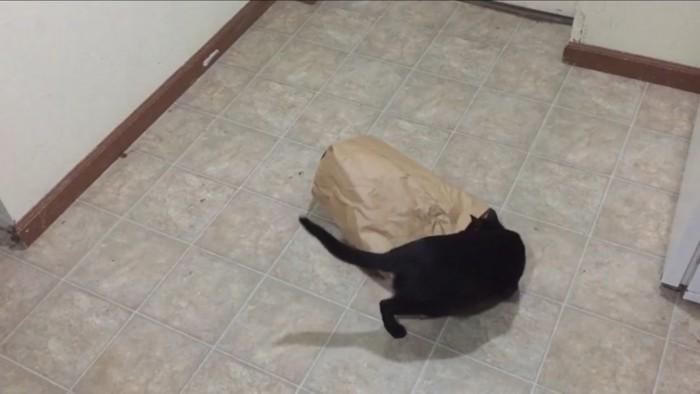中を見る猫