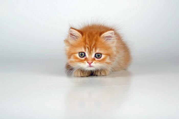 緊張した様子の子猫