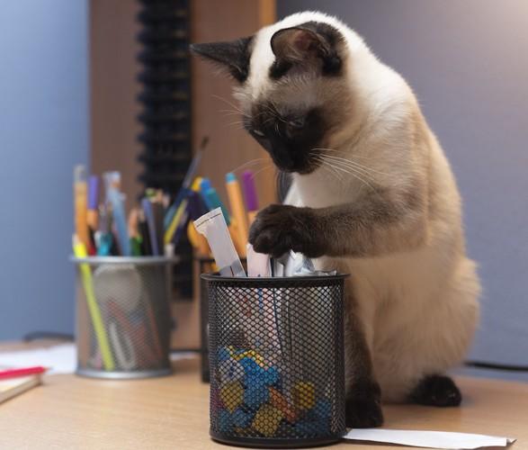 机の上でペンたてにイタズラをする猫
