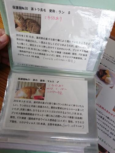 保護猫たちのアルバム