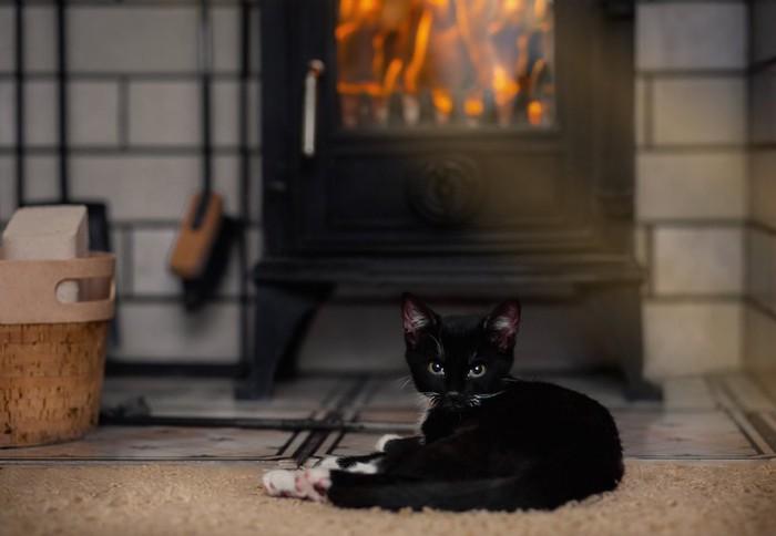暖房の前でくつろぐ子猫