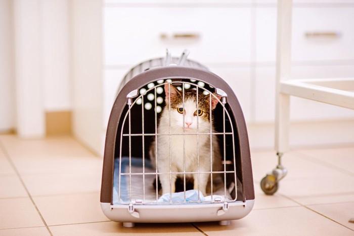 キャリーケースに入って不安そうな猫
