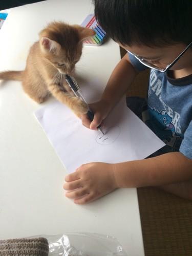 ペンで遊ぶ子猫