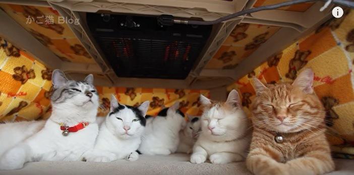 こたつの中でウトウトする6匹の猫