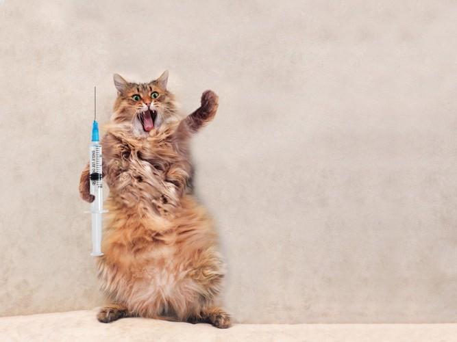 注射器と猫