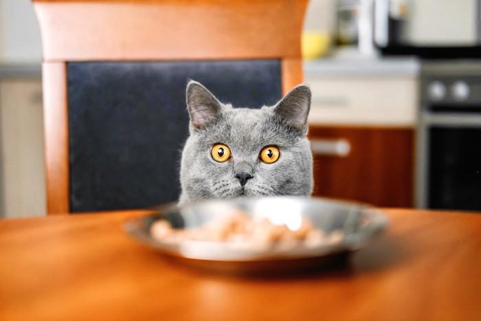 椅子に乗ってテーブルの上のお皿を覗く猫