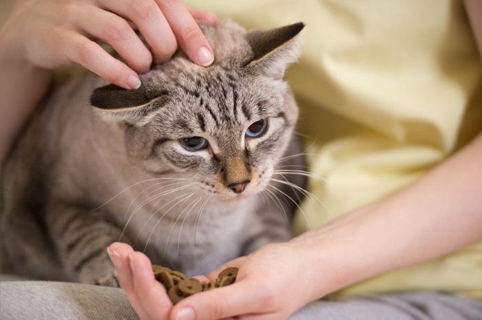 女性から餌をもらっている猫