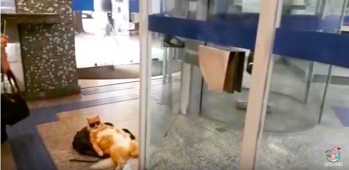 微動だにせずくつろぐ猫