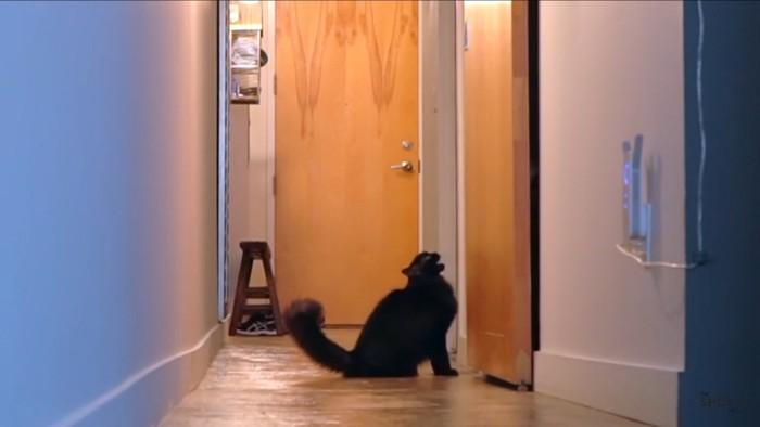扉の前で鳴く