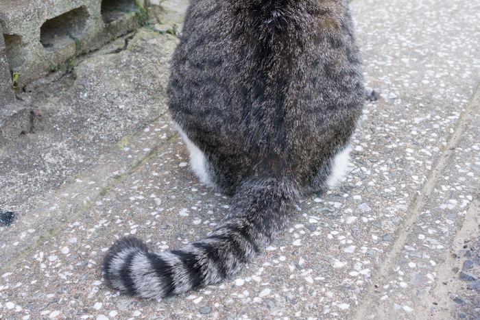 しっぽと猫の後ろ姿