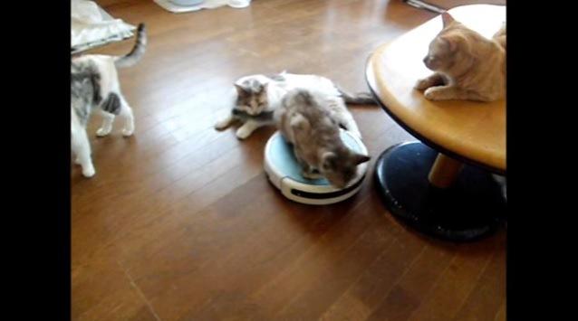 ルンバに乗る猫と3匹の猫